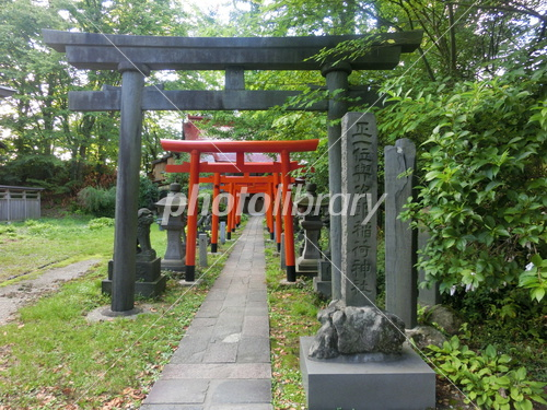 与次郎稲荷神社の鳥居 写真素材 ...