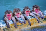 Bathing of monkey Stock photo [3540867] APE