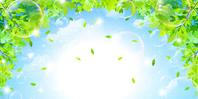 Leaf fresh green background [3664361] Leaf