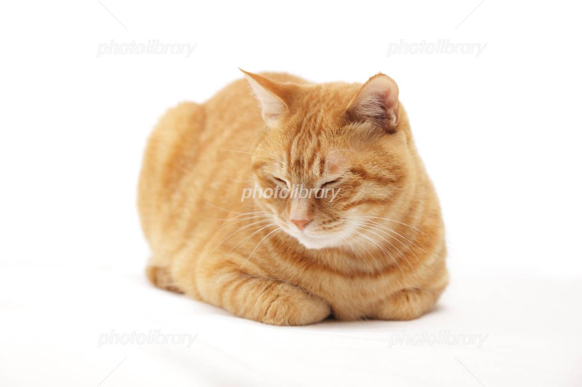 猫 香箱座り