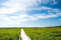 Hokkaido summer of Sarobetsu wetlands and Rishiri Mt. Stock photo [3766055] Nature