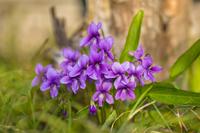 Violet Stock photo [3766586] Violet