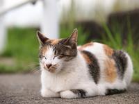 tortoiseshell cat sleep Stock photo [3767483] Cat