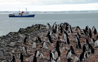 Of the South Shetland Islands of Antarctica penguins Stock photo [3772967] Antarctic