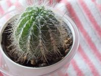 Cactus Stock photo [3884599] Cactus
