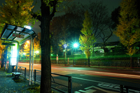 Midnight of ginkgo tree-lined and bus stops Stock photo [125256] Late