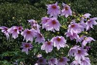 Kodachidaria of flowers and buds Stock photo [4228400] Kodachidaria
