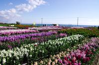 Flower garden of Chikura Stock photo [4270855] Chikura