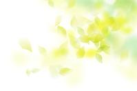 Fresh green fluffy white [4270958] Verdure