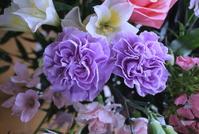 Blue carnation Stock photo [4271289] Carnation