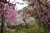 春の縮景園