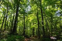 Forest of world heritage Shirakami Stock photo [4439020] world