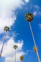 Palm tree Stock photo [4442724] Palm