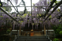 Fuji Ito Rinsenji Stock photo [4443638] Rinsenji