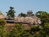 Sakura bloom Matsue ID:4432536