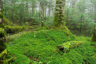 Forest of moss Stock photo [4524282] moss