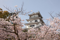 Imabari Castle of spring Stock photo [4595546] Imabari
