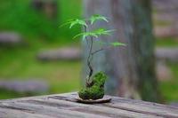 Kokedama Stock photo [4599963] Nature