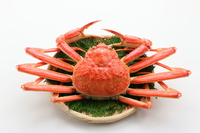 Snow crab Stock photo [4723461] Red