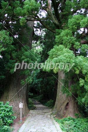 紀伊山地の霊場と参詣道の画像 p1_6