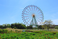 Ferris wheel of Ibaraki Hitachinaka National Hitachi Seaside Park Stock photo [4914087] Ibaraki