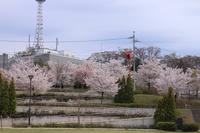 城山公園 青空と桜