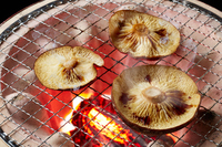Grilled shiitake mushrooms Stock photo [5014039] Shiitake