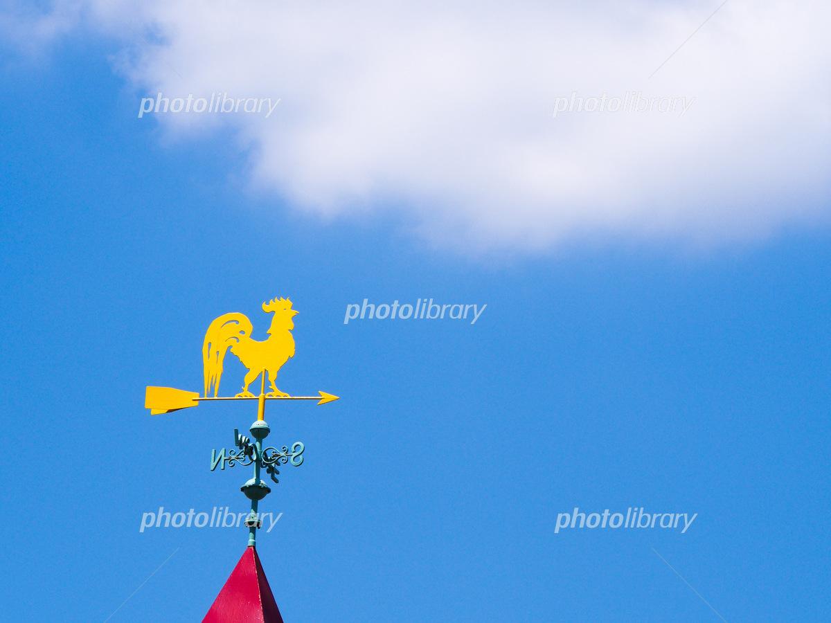 Wind climbing chicken and blue sky Photo