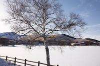 イラスト Lake Shirakaba in winter(5112208)