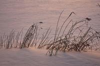 イラスト Dusk of Lake Shirakaba in winter(5112216)