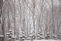 イラスト Winter scenery(5112273)