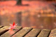 写真 Autumn rain and autumn leaves(5112610)