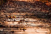 写真 Lake autumn walking path(5112614)