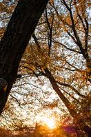 写真 Sunset in the woods(5112623)