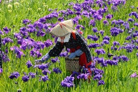 写真 A flower picker(5112648)
