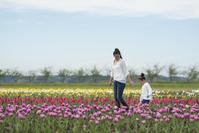 写真 Parent and child walking in the tulip field(5112769)