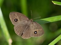 写真 Butterfly fish(5113956)