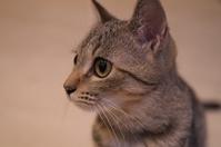 写真 Up kittens(5113985)