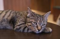 写真 Staring cat(5114119)