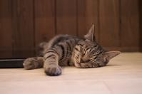 写真 Sleeping kitten(5114143)