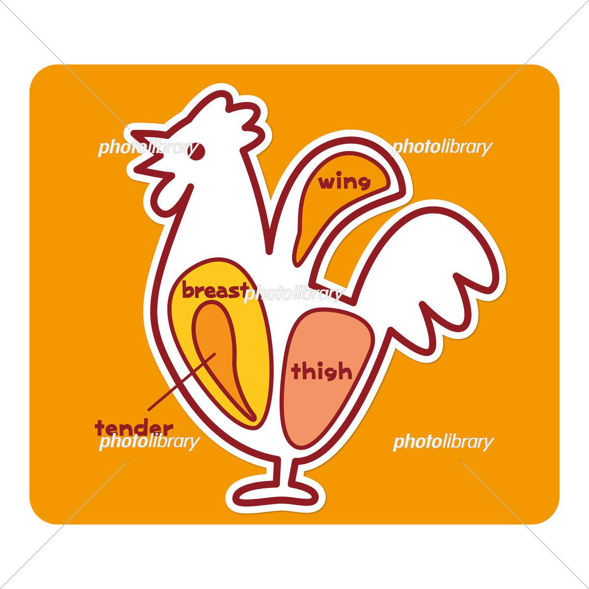 鶏肉の部位(英語) イラスト素材 [ 5193345 ] - フォトライブラリー