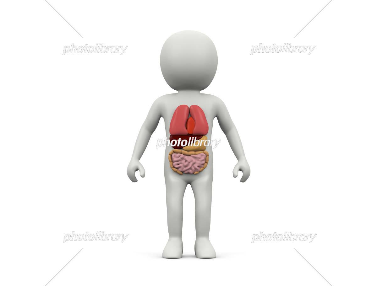 人体と臓器 イラスト素材 [ 5195507 ] - フォトライブラリー photolibrary