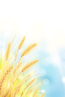 イラスト Wheat field(5200615)