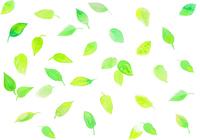 イラスト Leaf pattern pattern watercolor(5201624)