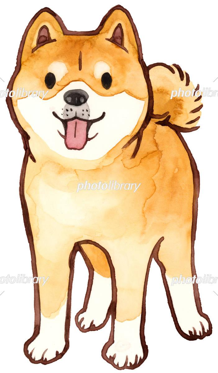 柴犬 正面 水彩画 イラスト素材 5292476 フォトライブラリー