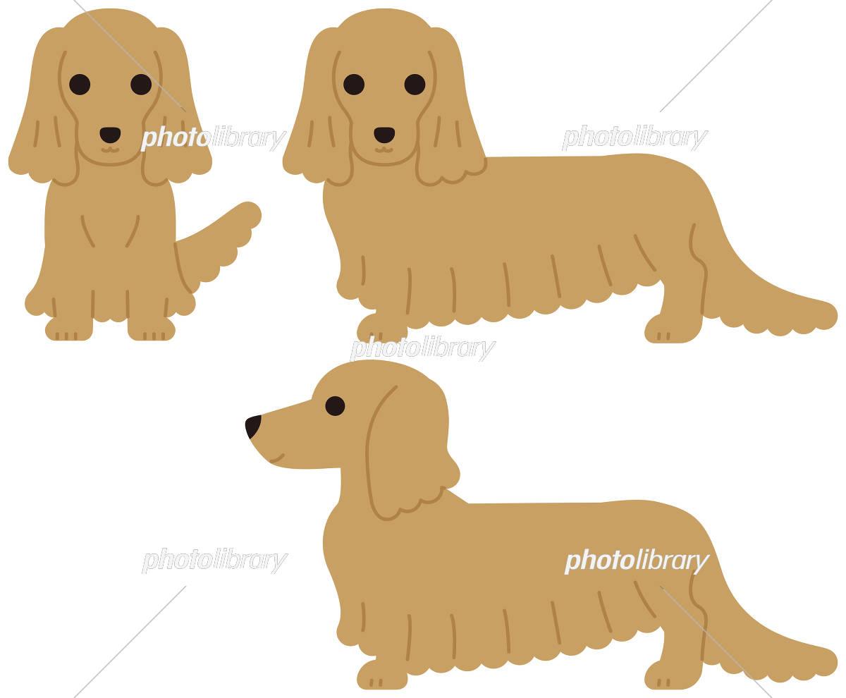 ダックスフンド 犬 イラスト素材 5294015 フォトライブラリー