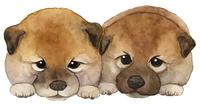 Japanese dog puppy watercolor painting [5290963] Shiba