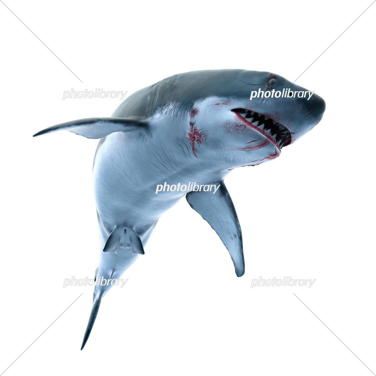 サメのイラストcg イラスト素材 5376884 フォトライブラリー