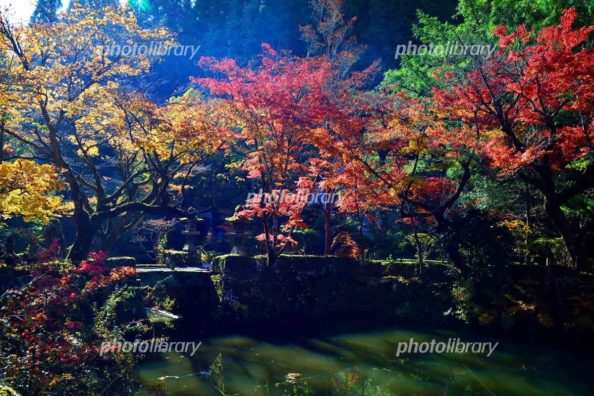 宝生寺の紅葉 写真素材 [ 538347...