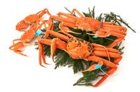 写真 Addictive crab ? male and female(5435036)